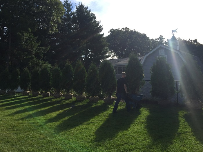 Tree Planting Wakefield, MA